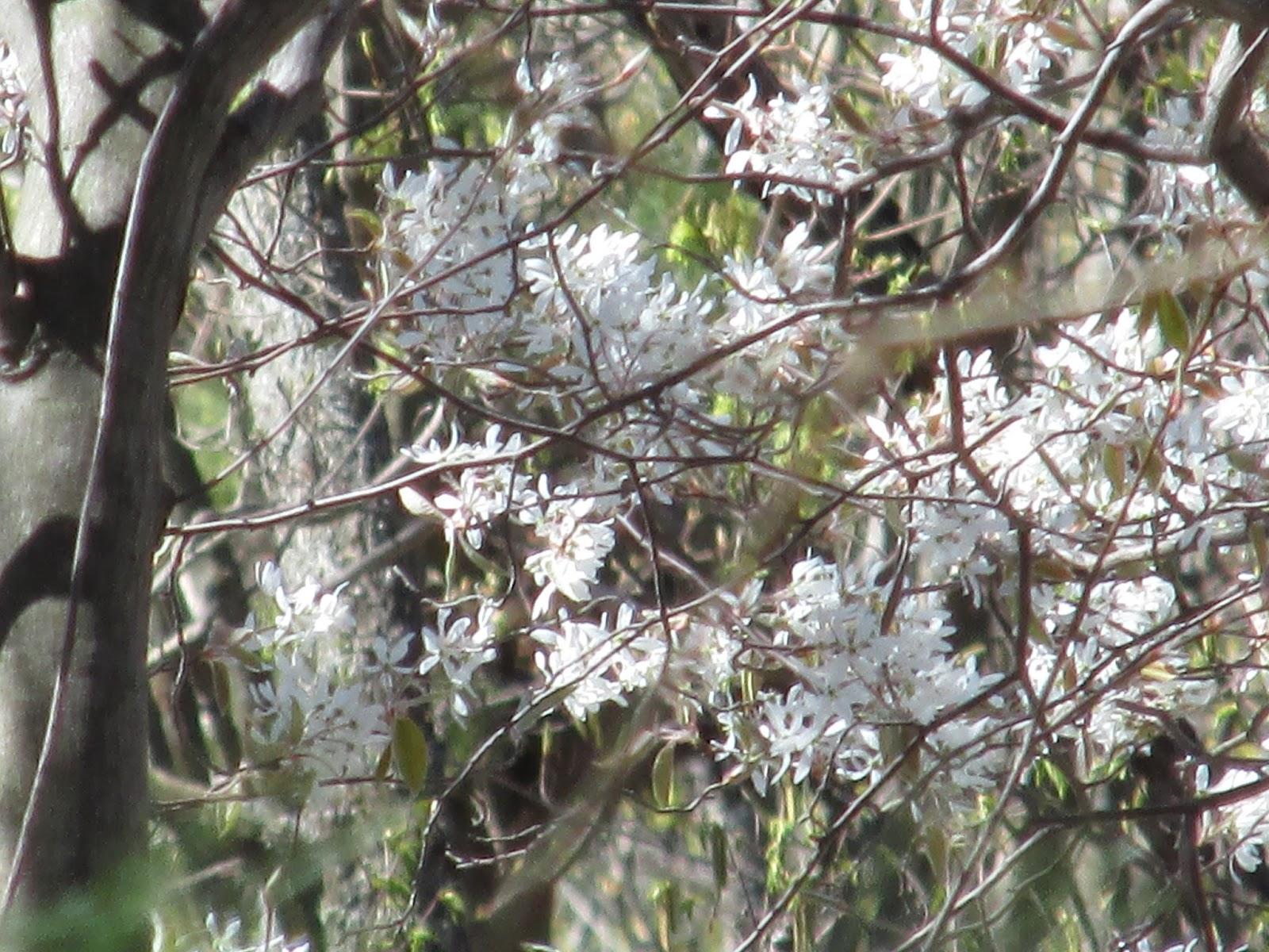 Grandma Pearl 39 S Backporch White Violets Narcissus
