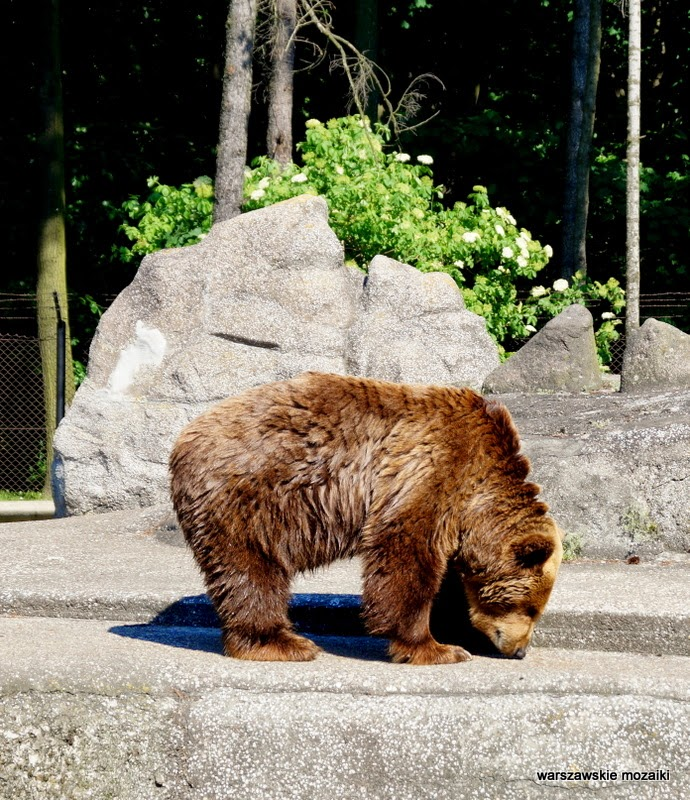 Praga Warszawa wybieg miśki Solidarności zoo