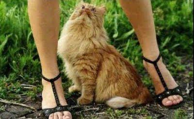 gato+miron Imagenes de animales Divertidos