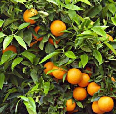Ceuja verano ciencias naturales 3ero temas de biolog a for Arbol con raices y frutos