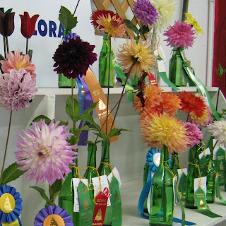 Dahlias at Mason County Fair