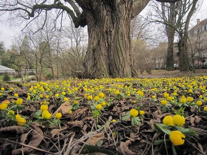 la fleur du dimanche d j des fleurs sous les grands arbres perdent elles le nord. Black Bedroom Furniture Sets. Home Design Ideas
