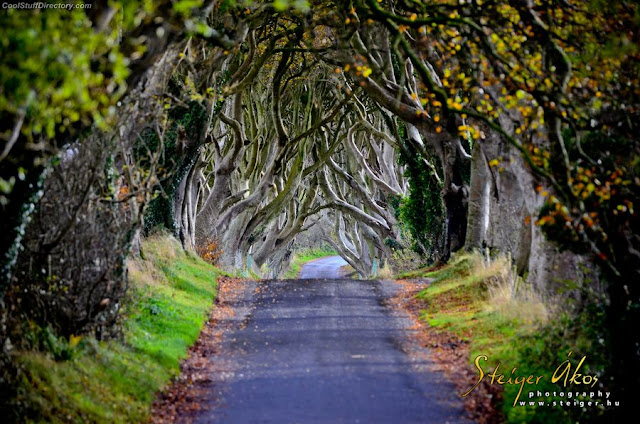 17. Dark Hedges by Akos Steiger