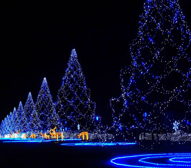 Christmas trees awesome wallpaper