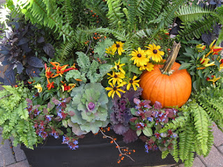 Fall container kale pumpkin