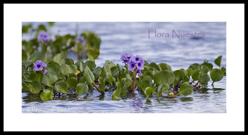 FLORA NUESTRA