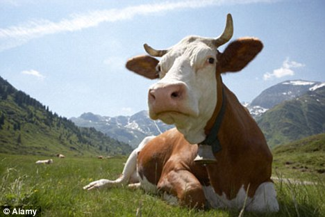 Gado do mundo coletivamente emitem apenas 100m de toneladas de metano por ano