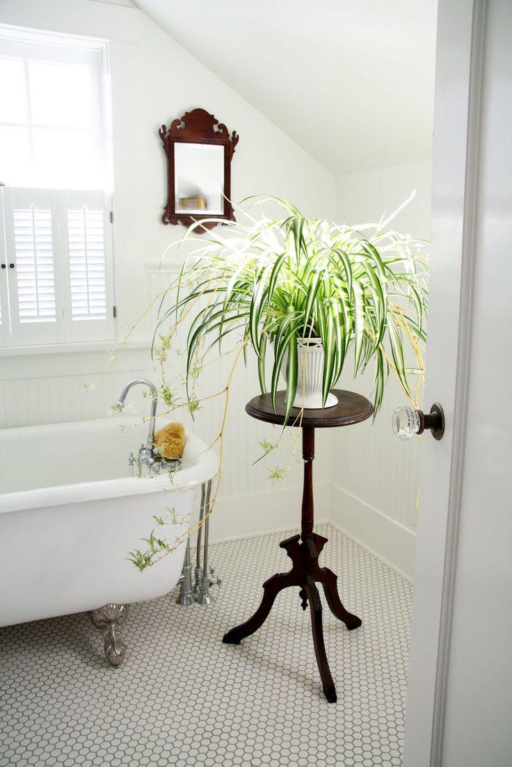 Quelles plantes dans une salle de bain sans fenetre