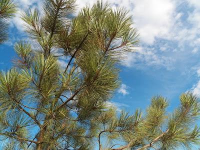 The nature preserve at Torrey Pines