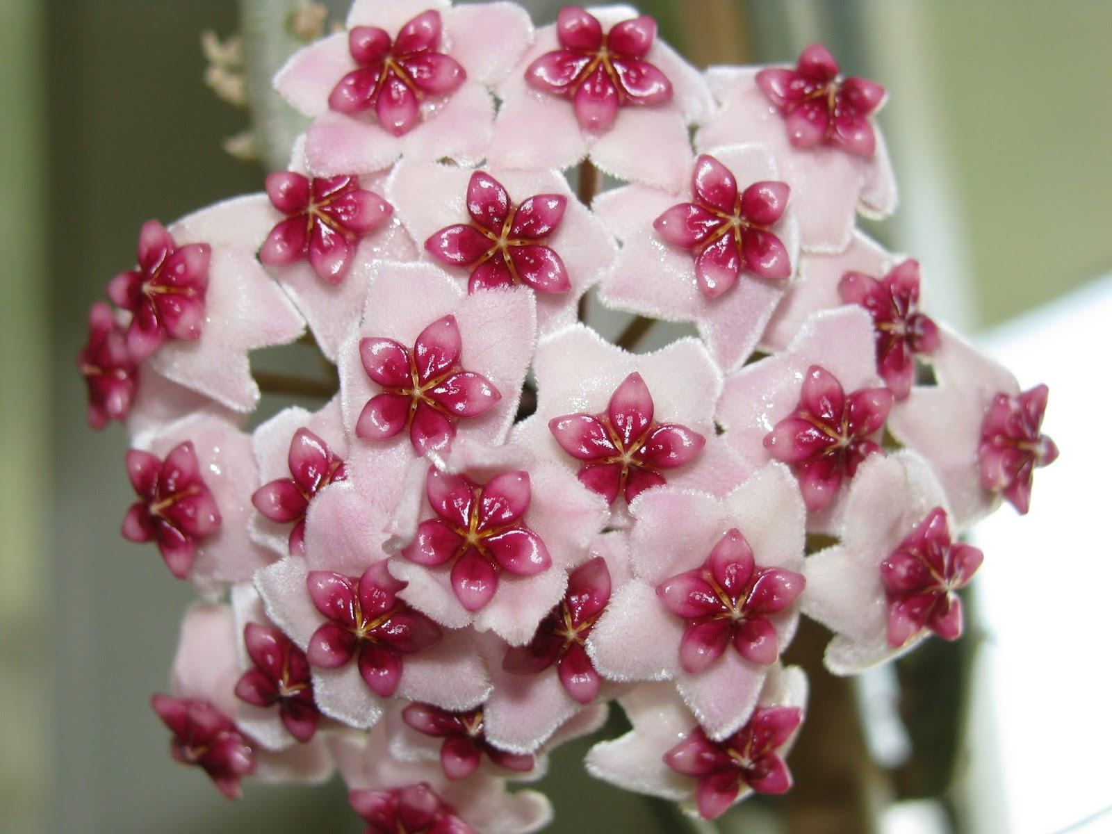 zielona przysta u0144 lulu         kwitnienie  2013
