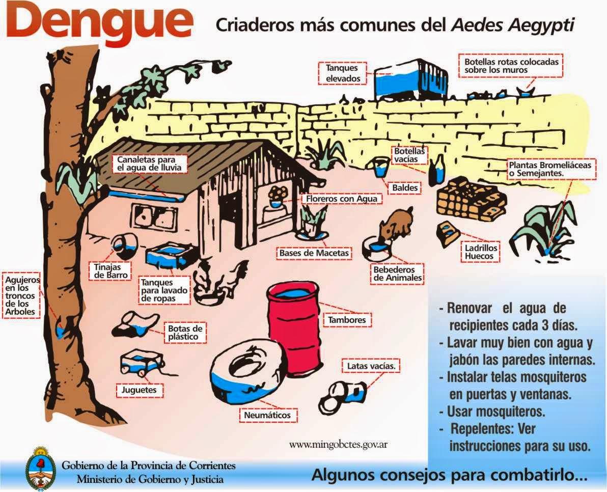 Im genes del mosquito del dengue mosquitos for Criadero de cachamas en tanques