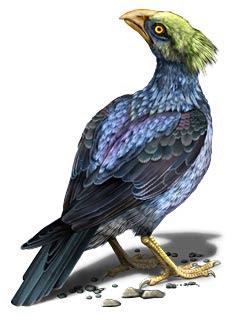 aves de 100millones de años Nanantius
