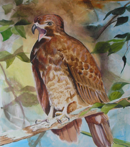 Hawk painting watercolor - photo#19