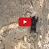 Watch: Incredible Rock Climbing Black Bears