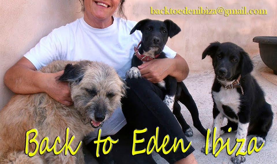 Back to Eden Ibiza