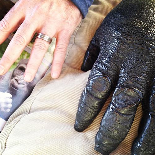 San Francisco Zoo - Gorilla Hand - NowThisLife.com