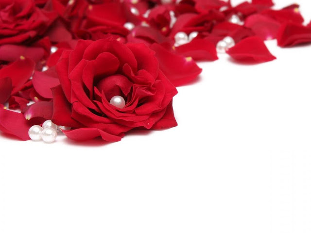 Beautiful Red Roses Flowers Collections 14