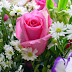 Different Types of flowers images photos