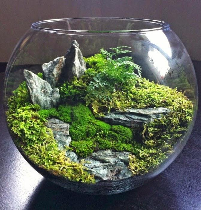 mini jardins em vidro:Entre Barrancos (DECORACIÓN): Terrarios caseros