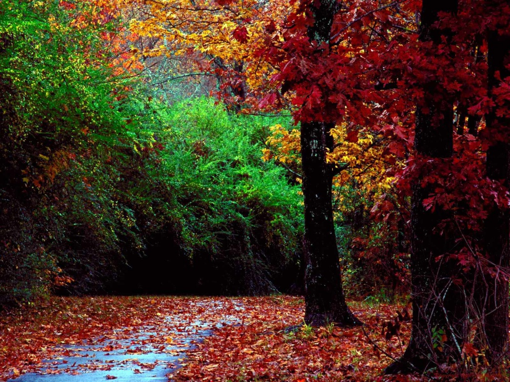 landscape autumn hd wallpaper - photo #31