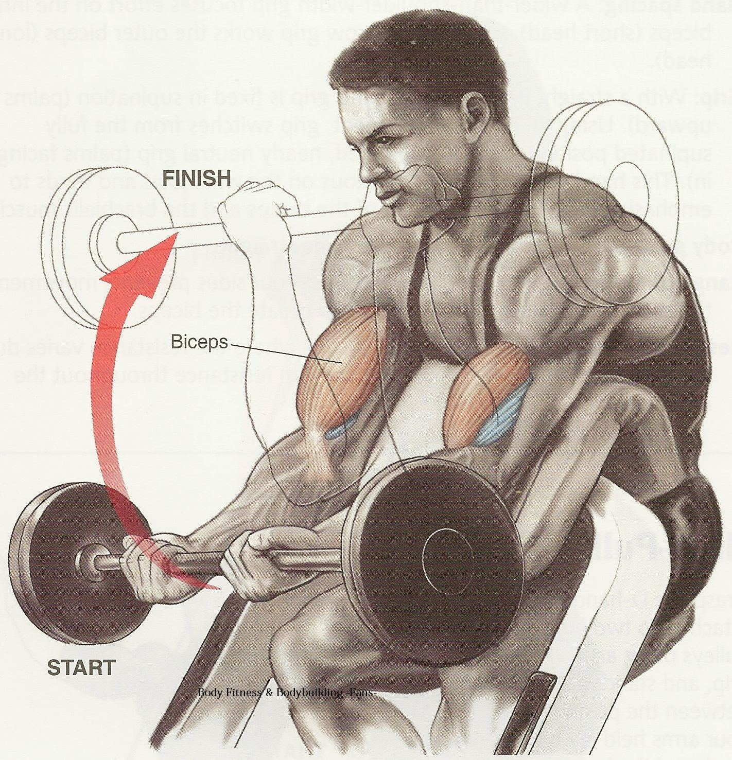 Biceps Workout Tips-Best Workout for Biceps