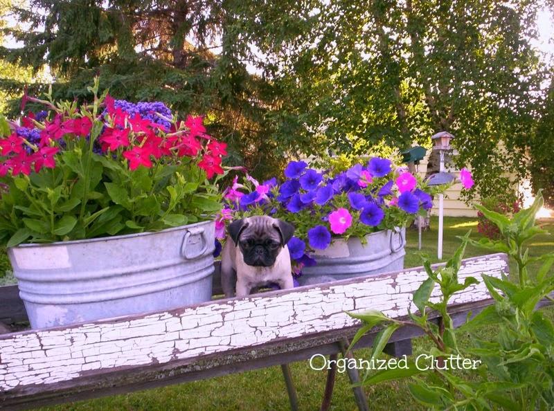 My Hometalk Garden Junk Clipboard Photos www.organizedclutterqueen.blogspot.com