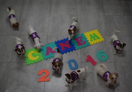 Algunos cachorros de la promoción 2016