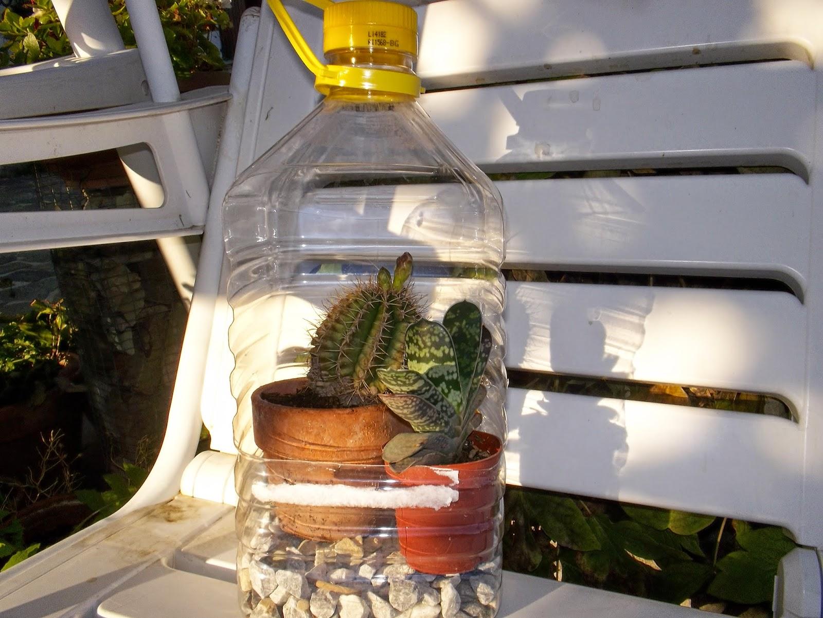 Taglia incolla e decora mini serra per piccole piante for Piccole piantine