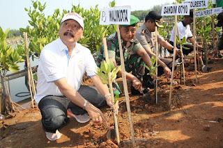 Peringati HUT, TNI Tanam Ratusan Mangroove