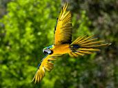 #12 Parakeet Wallpaper