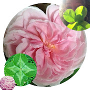 Our own Wild Crafted Flower Essences