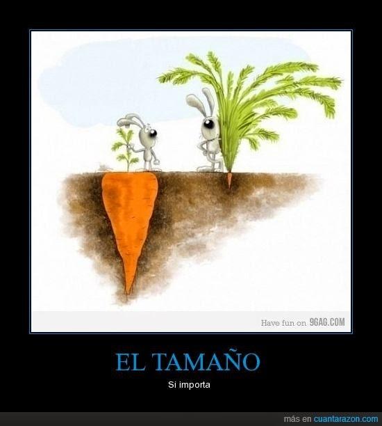 zanahoria grande enterrrada como saber