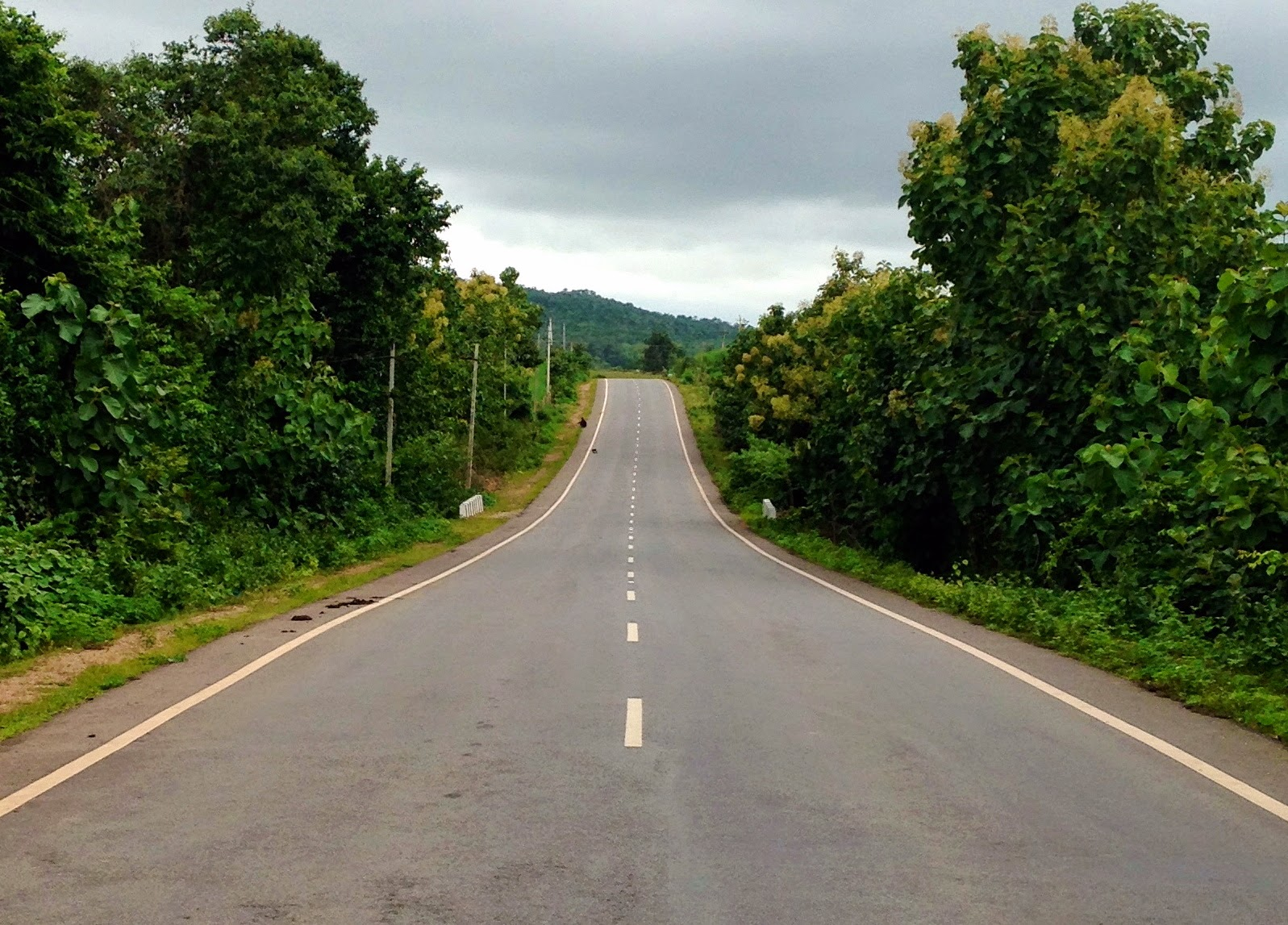 The road from Dharwad to Goa via Ramnagar is top class with lush greenery on either side!