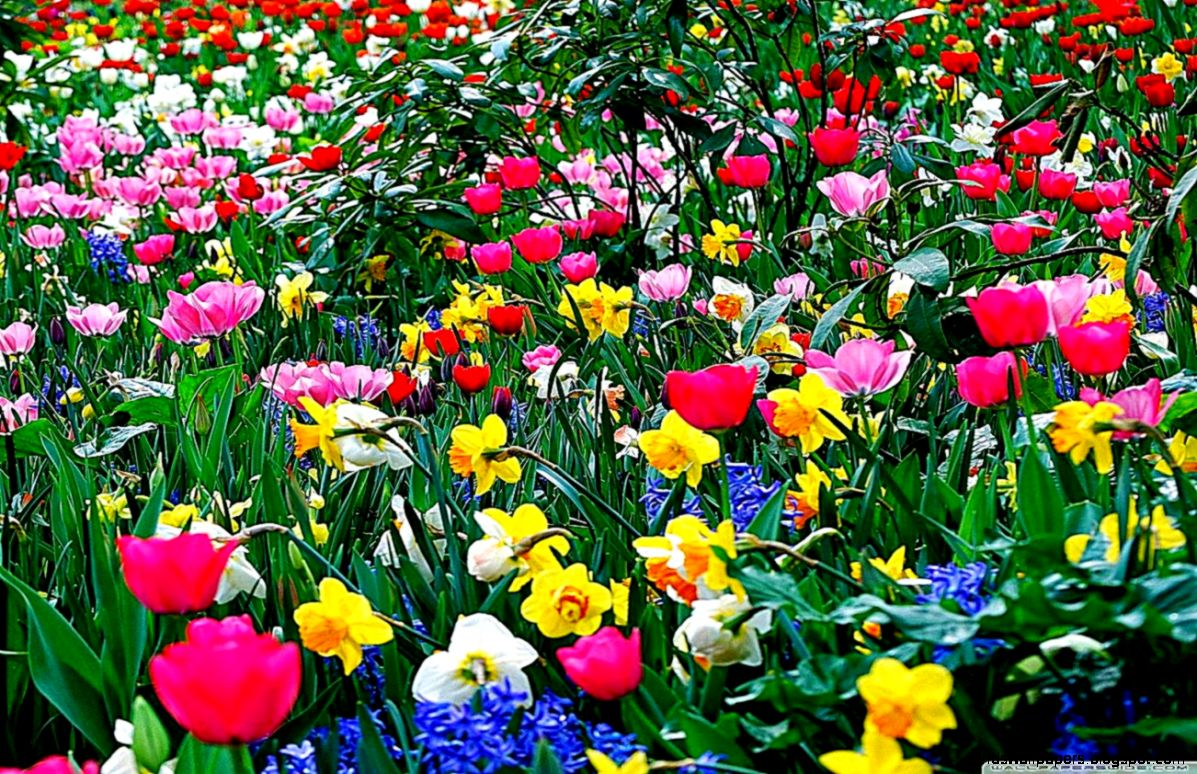 Desktop Wallpaper Flower Scenes All Hd Wallpapers