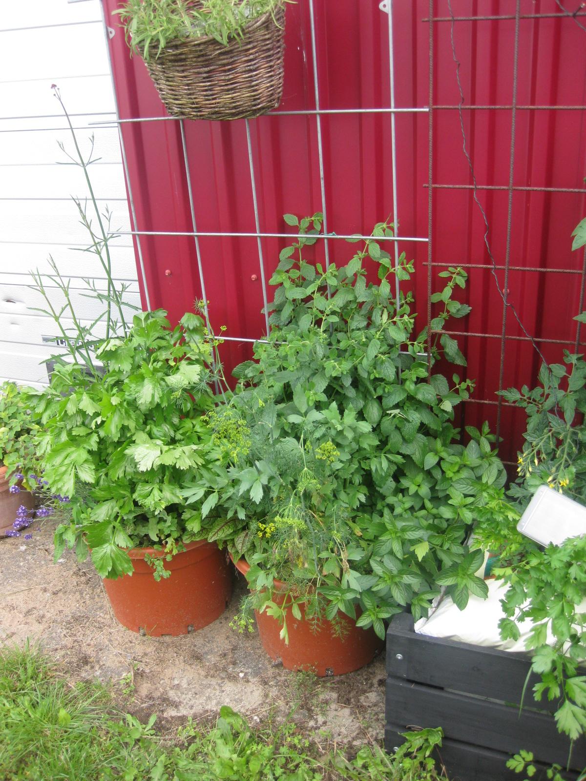plantesæk til kartofler