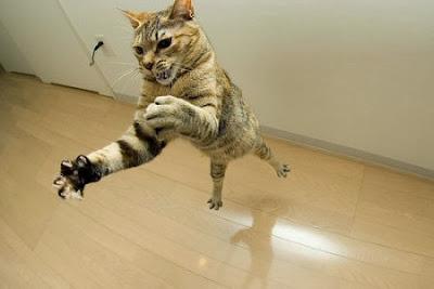 El Gato caza por gusto