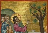 Ποια είναι η συκιά του Ευαγγελίου που ξεράθηκε φαινομενικά παράλογα;