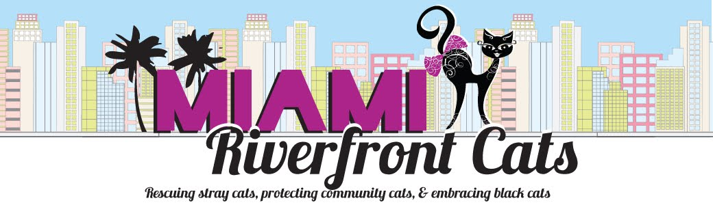 Riverfront Cats, Downtown Miami