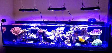 11 Inspirational Innovative Marine Nuvo Aquariums - Marine Depot Blog Real Ocean Trenches
