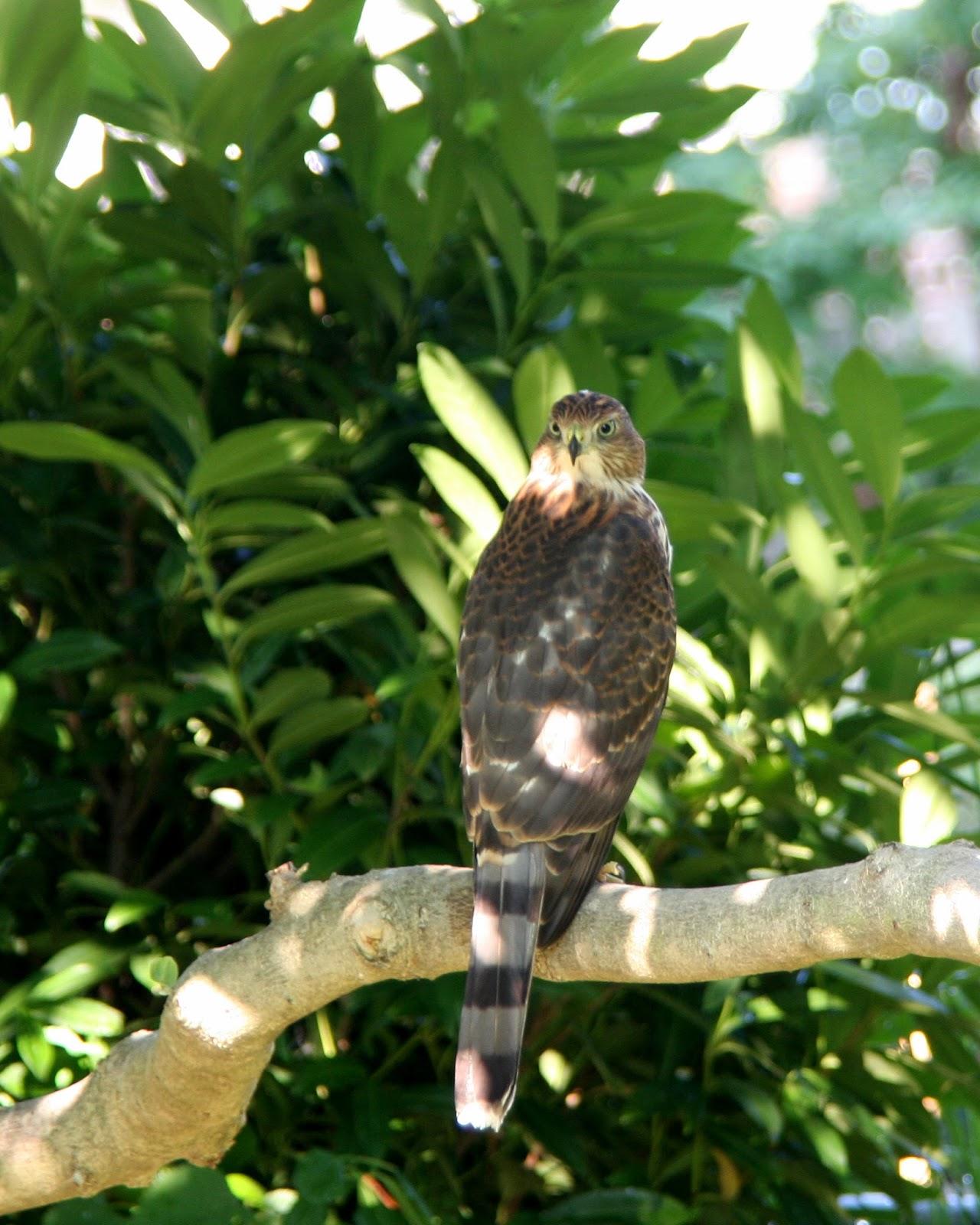 world bird sanctuary september 2013