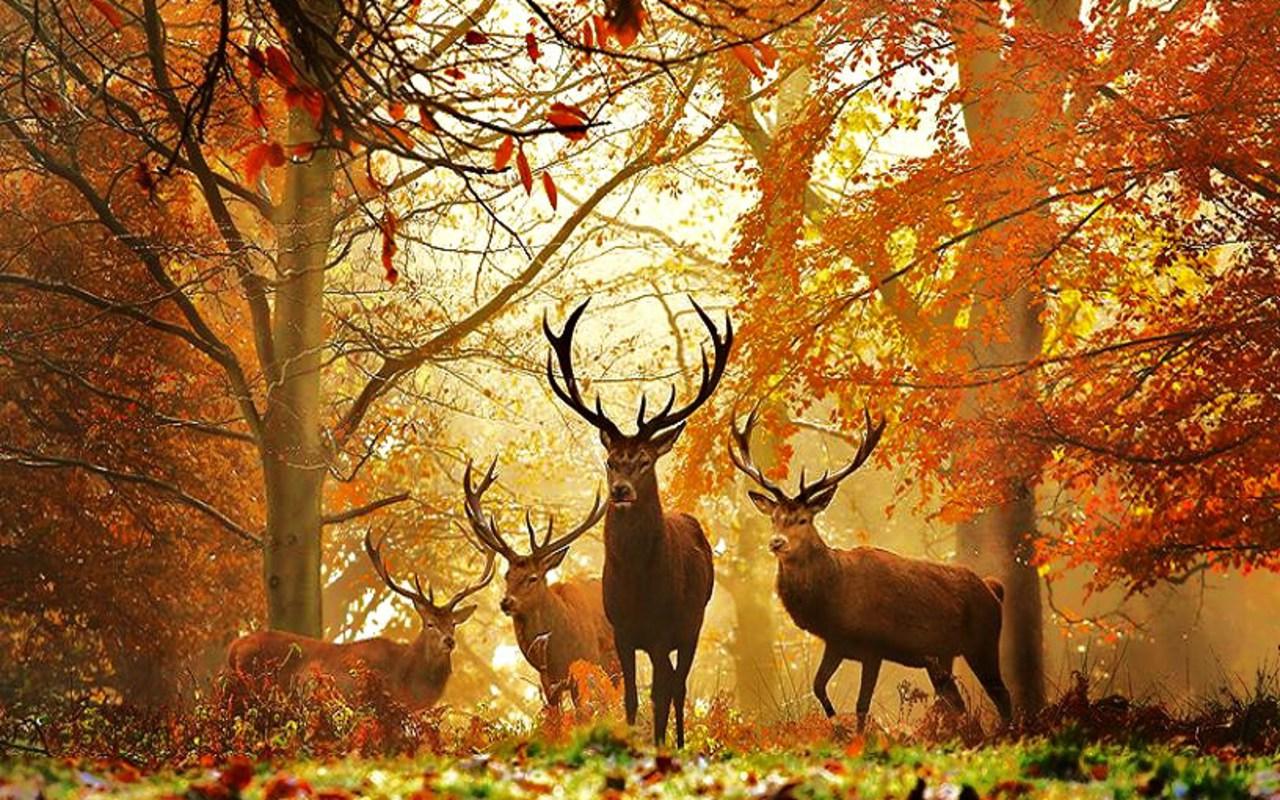 All in one lovely desktop mobile wallpapers animal wallpapers - Free deer hunting screensavers ...