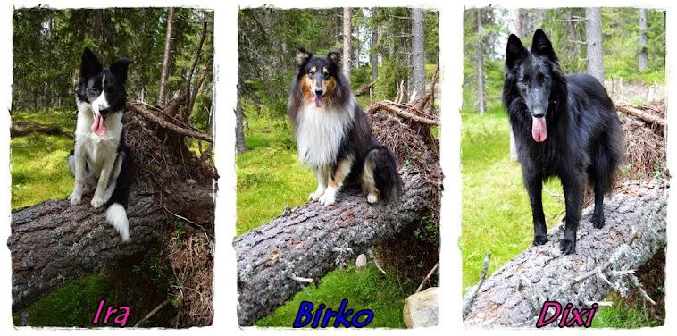 Birko og Dixi sin hverdag