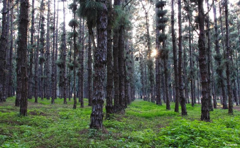 Forêt de Nouzhat Ibn Sina, Rabat