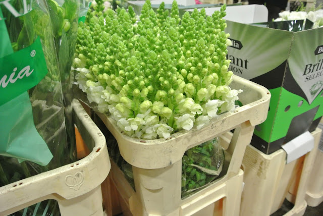 New Covent Garden Flower Market, Stocks