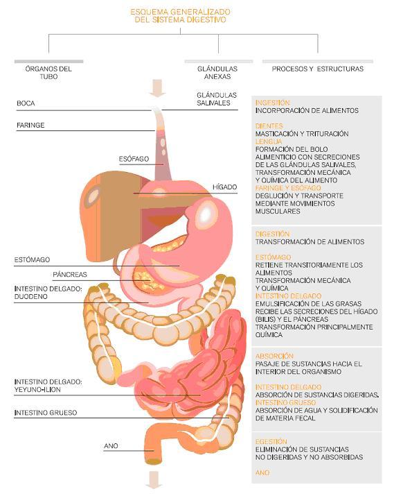 EL CONOCIMIENTO SE COMPARTE: CIENCIAS NATURALES: Sistemas que ...