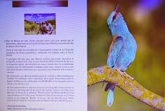 Porfolio Revista IRIS LNH