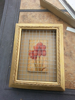 Cheesehead gardening succulent picture frames from for Best places to buy picture frames