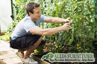 Jadikan Kebun sayur di ruang kecil rumah