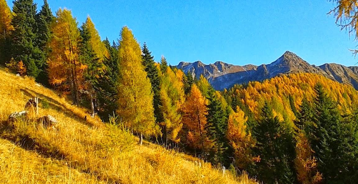 Bauernhof scalzerhof valle dei mocheni agritur bersntol for Le pigne dei larici