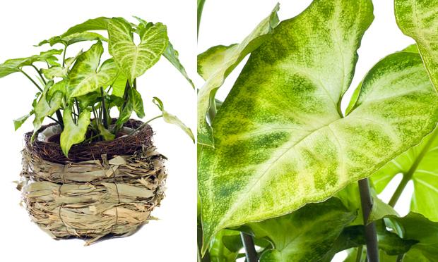 plantas de jardim que gostam de umidade : plantas de jardim que gostam de umidade:Babosa-de-pau – folhas grossas, é ótima para jardins internos, sem